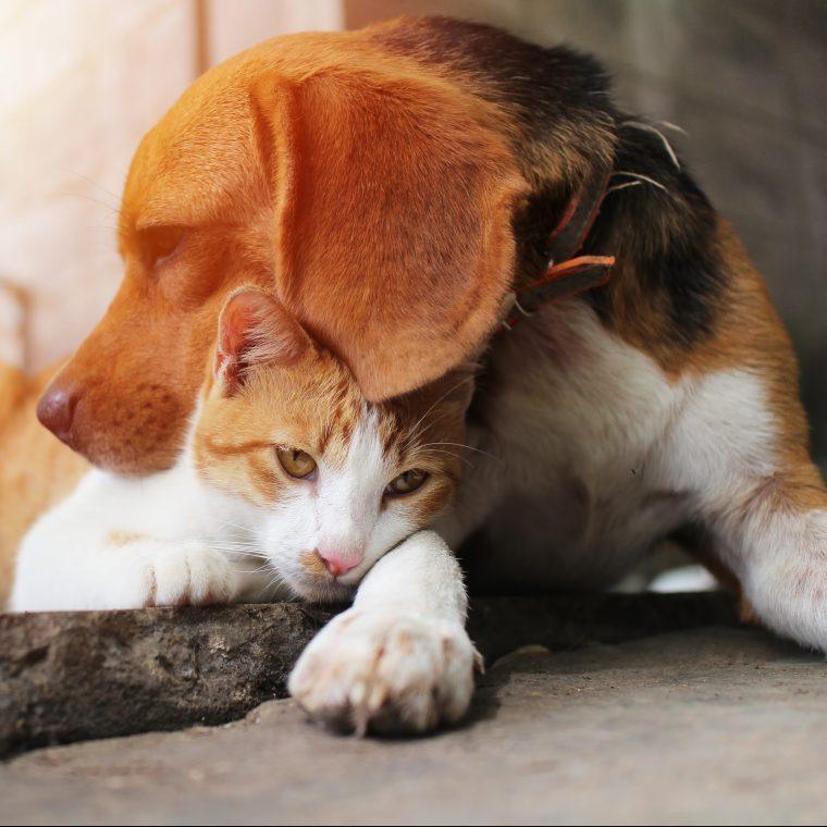 Cat + Dog